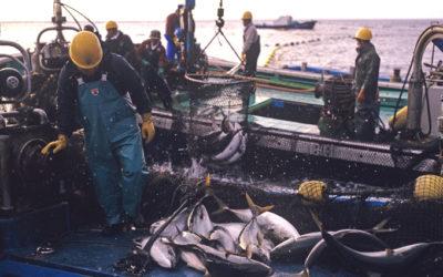 漁師 年収 マグロ